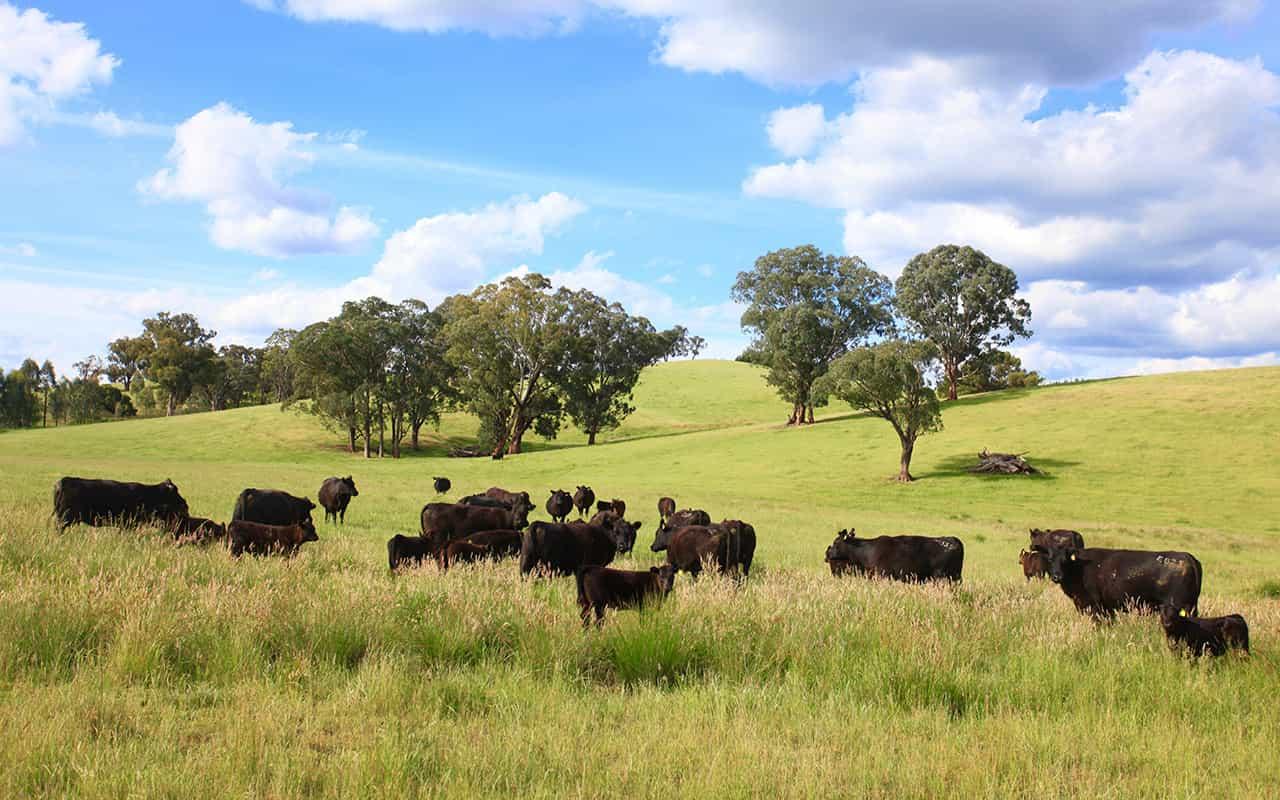 Livestock Producer