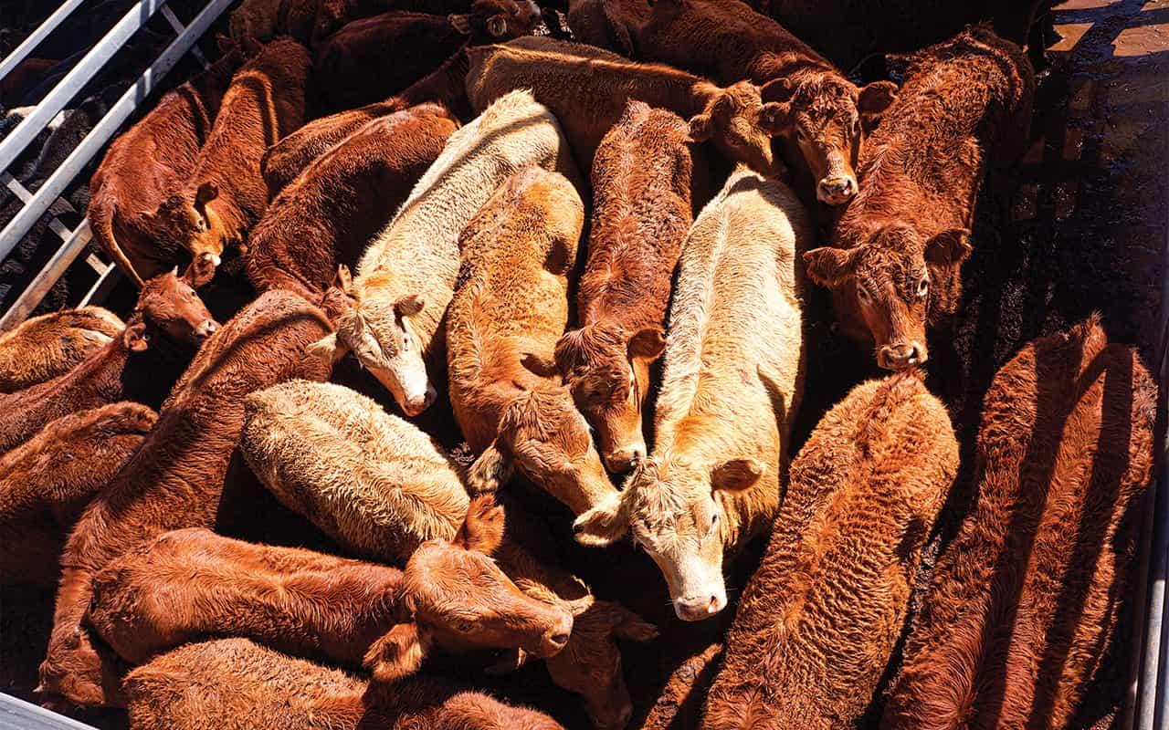 Livestock Buyer
